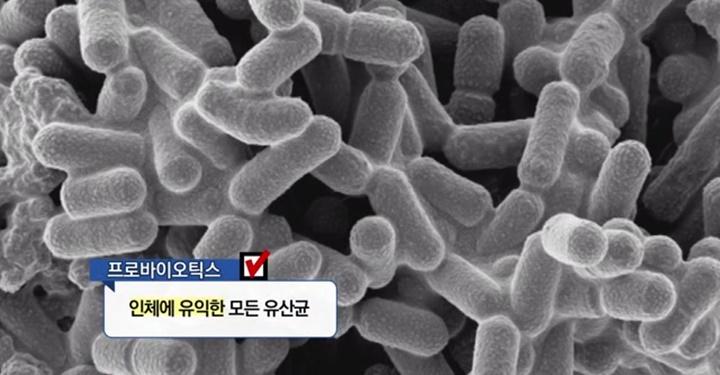 유산균에서 유익균으로, 유익균이 대체 뭐야?