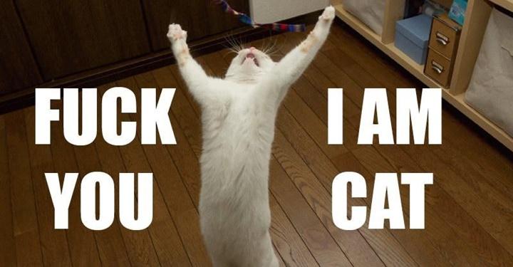 당신이 고양이와 함께 살기로 결심했을 때