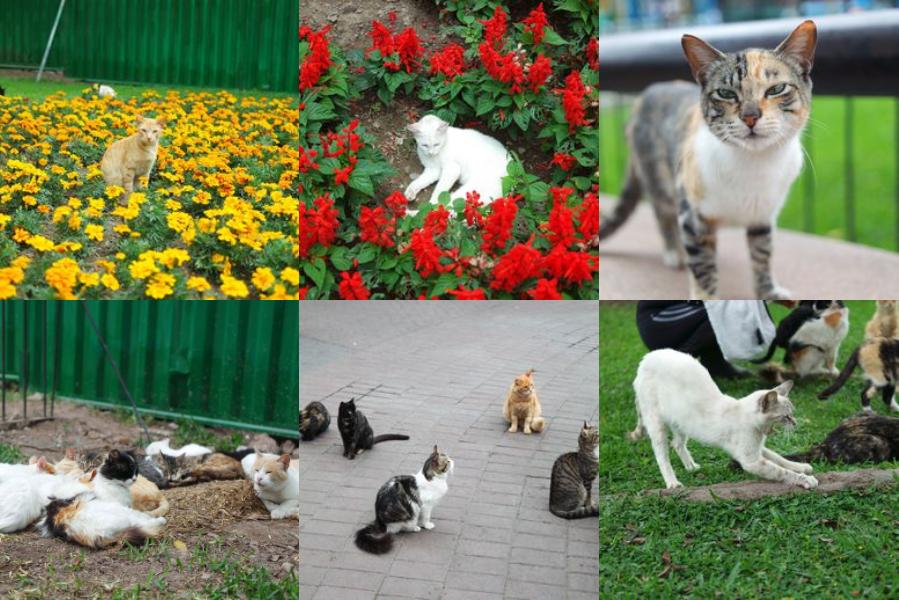 냥덕이냥? 애묘인이 사랑할 수밖에 없는 여행지 4곳