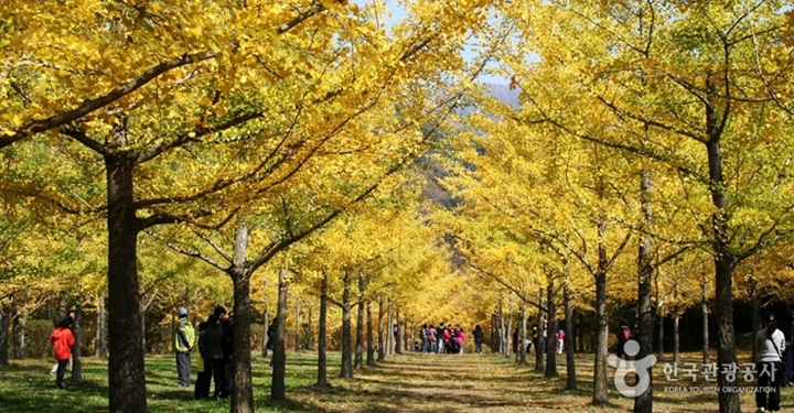 낭만적인 가을밤부터 음원퀸의 거리공연까지, 가을 여행주간 100% 즐기기