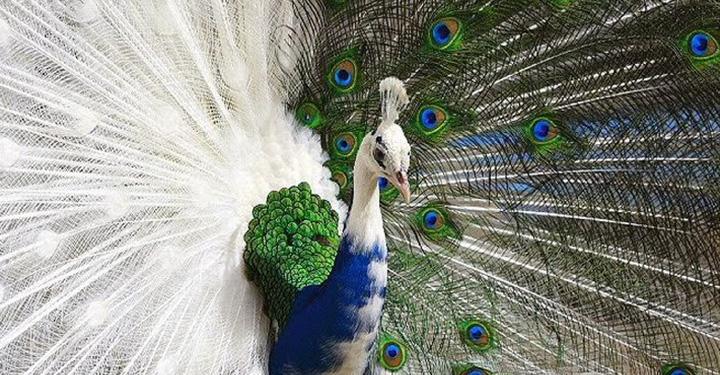 아름다움의 진화: 가장 예쁜 것이 생존한다