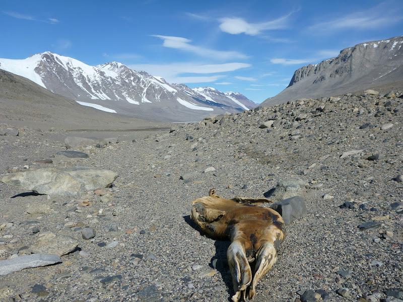 기온 상승으로 인해 변해가는 남극 토양 생태계