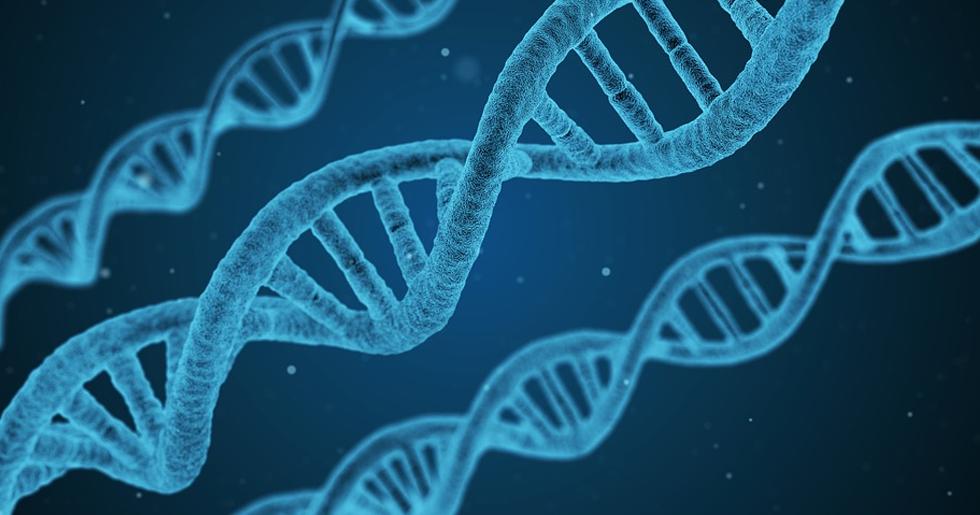 무성생식이 유전자 손실을 불러온다