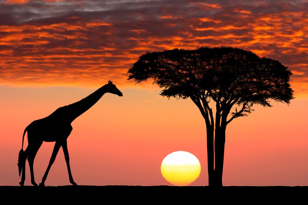 나의 첫 아프리카 여행기, 시작은 탄자니아 여행