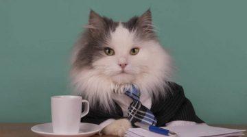 비즈니스로 배워서 다시 비즈니스에 써먹는 교훈 65가지