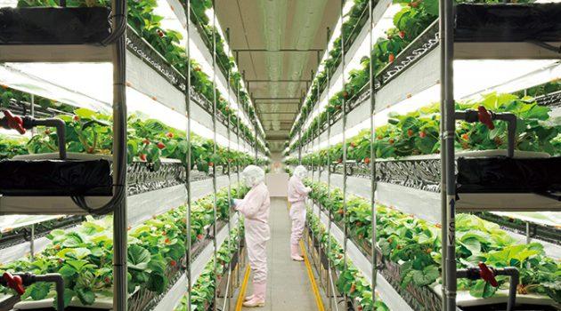 농업이 제조업이 될 수 있을까?