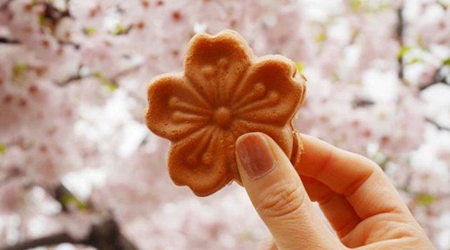 봄을 만끽하는 방법, 벚꽃 디저트 8