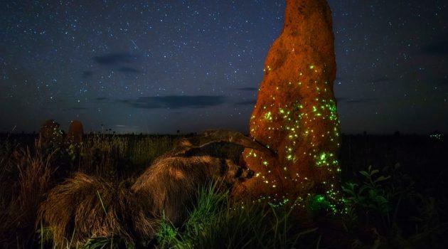 경이로운 자연의 모습을 담은 사진이 실은 연출과 조작의 산물이라면?