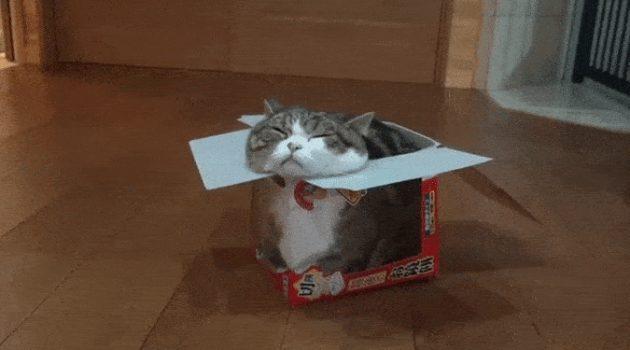 고양이가 박스를 좋아하는 이유
