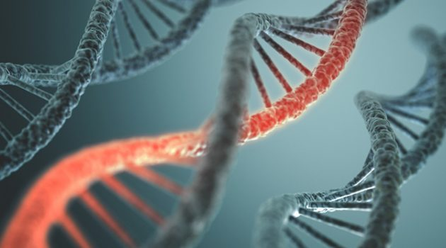전유전자성 모델: 거의 모든 유전자가 키에 영향을 미친다?