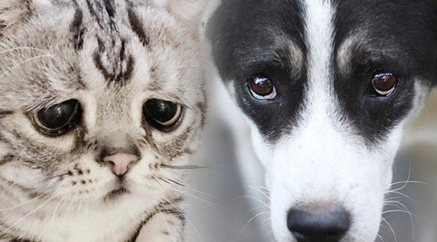"""""""1주일에 한 번은 치료비 때문에 반려동물의 생명을 포기하고 돌아가는 사람이 있어요"""""""