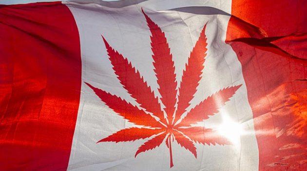 캐나다 대마초 합법화 이후에도 암시장이 번성하는 이유
