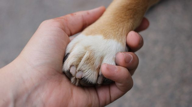 내 개만을 위한 사랑, 다른 동물에게도 확장하기로 했다