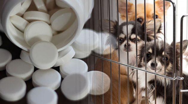 강아지 구충제로 암을 치료한다고?