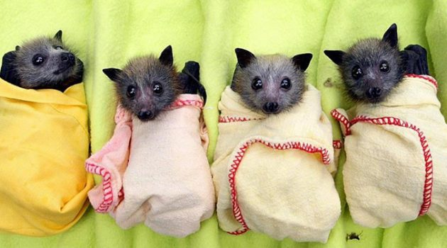 동료끼리 서로 돕는 흡혈박쥐