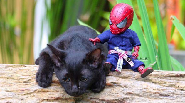 고양이와 스파이더맨, 그들의 재미있는 일상