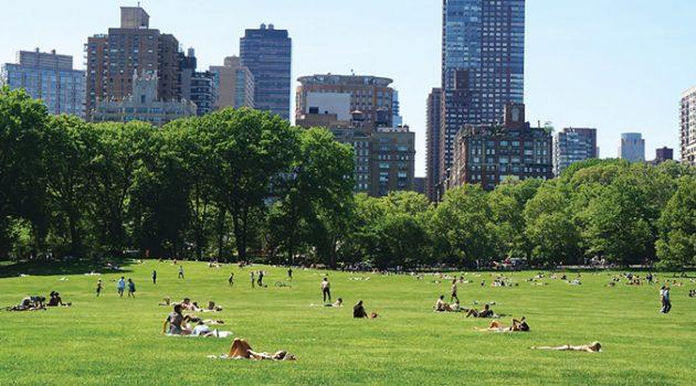 뉴욕 센트럴파크 공원에 기부한 사람이 받는 특별한 선물은?