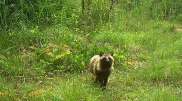 후쿠시마 원전 지역에서 번성하는 야생 동물