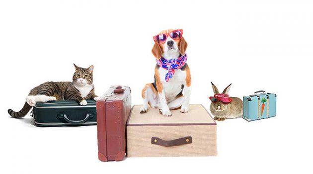[매일 돈 버는 여자] 11. 펫시터: 강아지를 돌봐드립니다, 내 집에서!