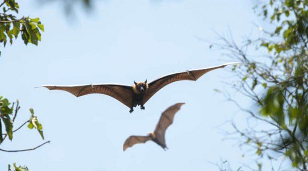 수백만 년 동안 박쥐와 함께 공진화한 코로나바이러스
