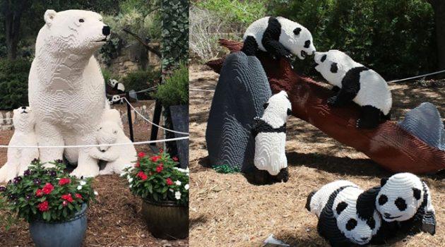 레고 동물들을 만나 보세요, 샌안토니오 동물원