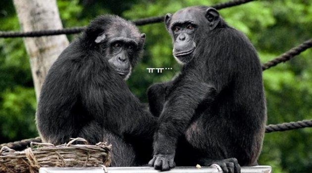 코로나 19 감염 위험성이 큰 동물은?