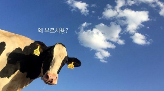 소처럼 일한다는 말에 소는 어리둥절하다
