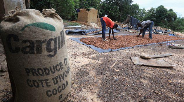 코코아: 달콤하지만 쓰라린 공급망