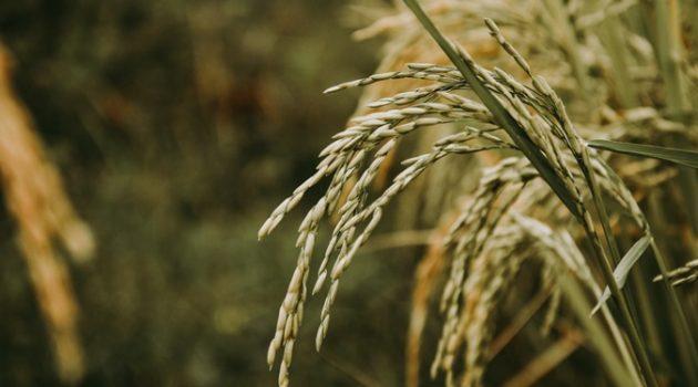 식량자급률은 높으면 좋은 것일까?