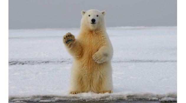 1994년에서 2017년 사이, 지구는 28조 톤의 얼음을 잃었다