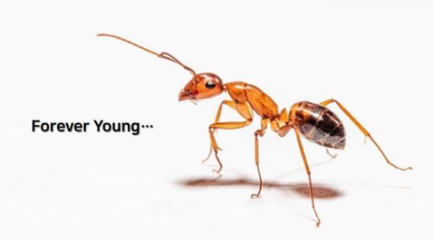 젊음을 유지하고 수명을 늘려주는 기생충?