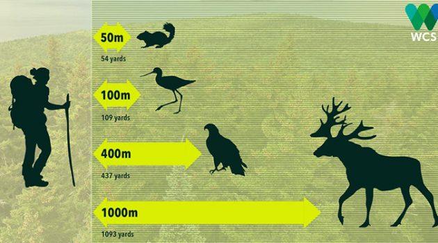 자연의 야생동물과도 '거리두기' 해야 하는 이유